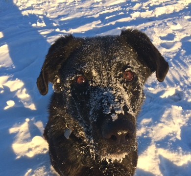 Howie loves the snow!
